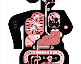 "Female Anatomy Chart 17x22"" Art Print by Raymond Biesinger"