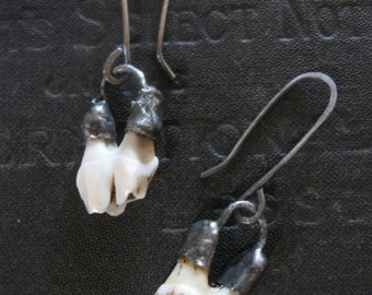 Chompers - White Tail Deer Tooth Earrings