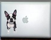 Boston Terrier Full Color Art Decal Apple Macbook Laptop