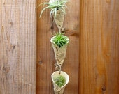 Air Plant Wall Vases (3) - Three Small Hanging Planters - Real Cucumber Leaves Applied to Fronts - Succulents - Wall Pockets - Gardener Gift