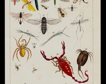1833 Antique INSECTS print, dragonfly, damsefly, fly, mosquito, spider, scorpion, worm hand colored engraving