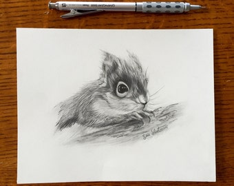 SALE Original Squirrel Sketch