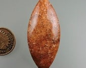 Agatized Fossil Coral (Colonial) 100% Natural Hand Cut Cabochon from 49erMinerals Stock C1469, free U.S. shipping