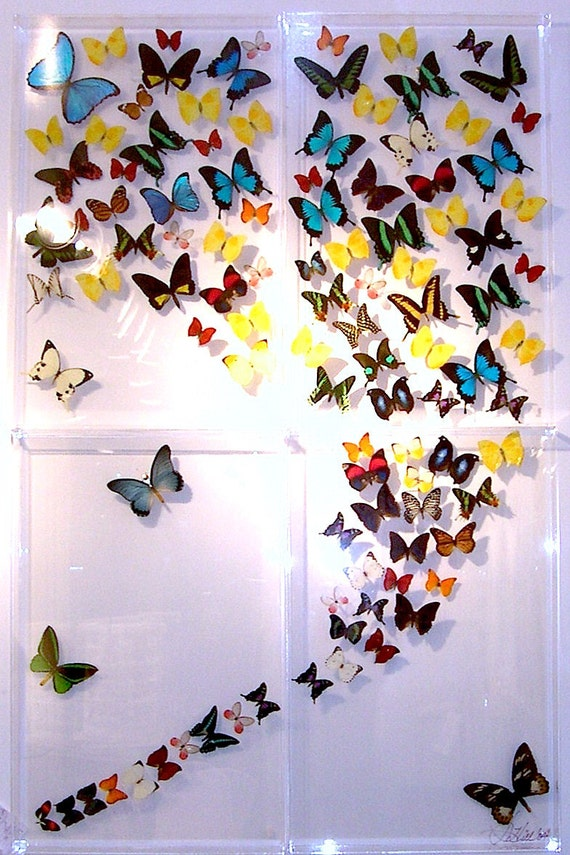 Four Panel Mariposas