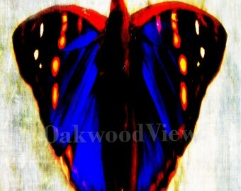 Emperor Butterfly Print, Multicolored Surreal Giclee Art, New 4x6 Color Print in 5x7 Mat, Nature Wildlife, FREE SHIPPING