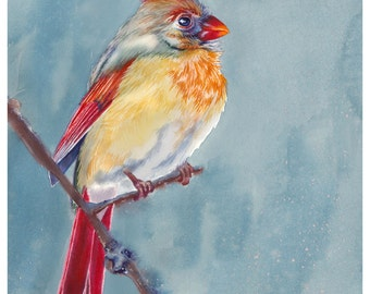 "5x7"" Cardinal Bird Watercolor Giclee Fine Art Print [Watercolor Cardinal Bird Portrait Print, Cardinal Bird Print, Cardinal Watercolor Art]"