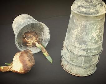 Antique zinc sap pot from Europe