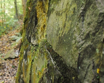 Mossy Crevices