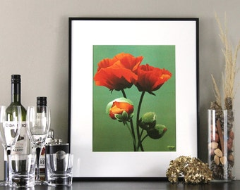 Oriental Poppy Flower Art Print Illustration