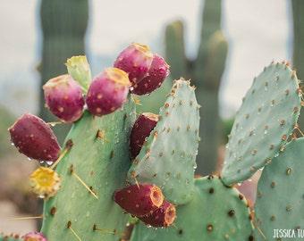 Rain Photography, Desert Rain, Raindrops on Cactus, Prickly Pear Cacti, Arizona, Phoenix Desert, Mint, Mauve, Pink, Home Decor Piece, Muted