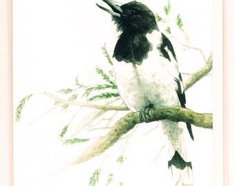 Pied Butcherbird Greeting Card, Australian Birds, Wildlife, Watercolor Illustration