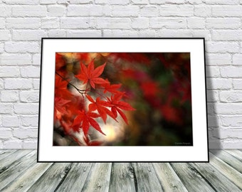 Painterly Foliage Photography, Autumn Leaves Photo, Nature Photography, Red Wall Art Print, Fall Home Decor, Maple Leaves Photo Print