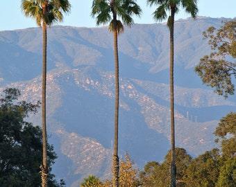 Santa Barbara Palms - Photo Print