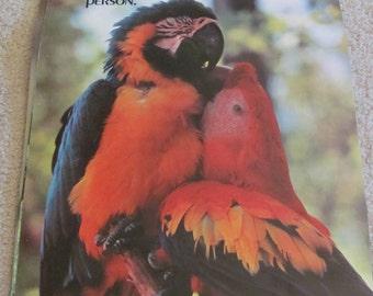 """Vintage 1980s Poster 14"""" x 21"""" Argus  - Parrots - Don't fuss..."""