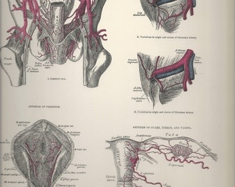Arteries of the Pelvis,  Anatomical Plate 66, Descriptive Atlas of Anatomy 1880