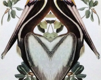 Strange Bird Audubon Collage: Brown Pelican