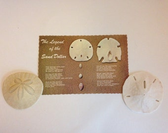 The Legend of the Sand Dollar postcard with two real Sand Dollars