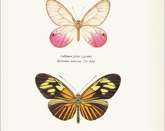 vintage butterfly insect art print pink colourful butterflies calliteara pireta Heliconius amazona insect home decor 8x10 inches