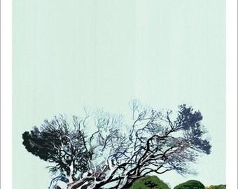 Windswept Tree, WA