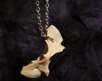 Fox Atlas Vertebra Bone Necklace