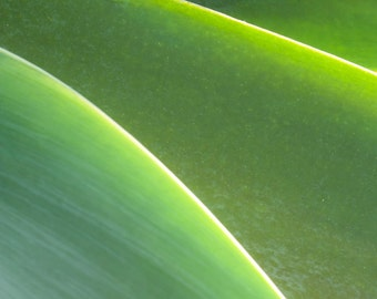 Abstract Aloe Plant Photograph.