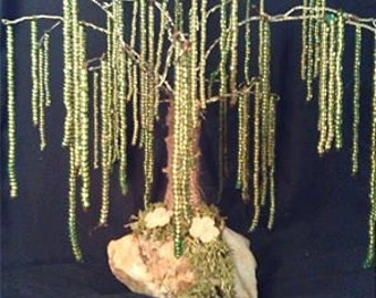 Weeping Wire Willow