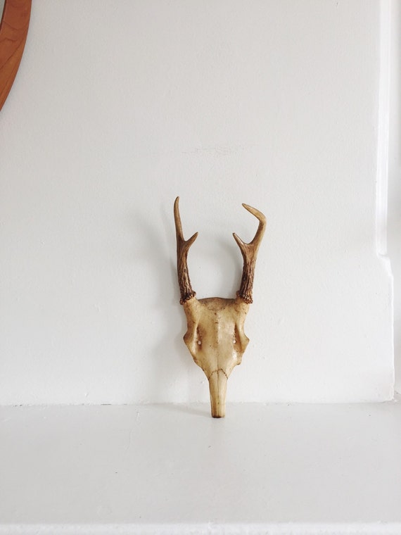 Vintage Deer Skull And Antlers Wall Hanging Mounted Skull