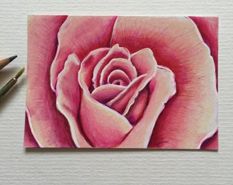 Pink rose ACEO/ Artists trading card. Coloured pencil. Free UK delivery.