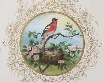 Antique Chaffinch Illustration