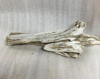 Dinosaur Femur Driftwood, big bleached weathered wood, taxidermy, aquarium, terrarium decoration, table centerpiece, waterfront coastal wood