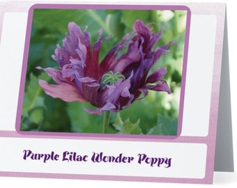 Greeting Card with Gift of Purple Lilac Wonder Poppy Seeds!