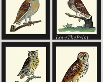 Owl Wall Art Print Set of 4 Beautiful Antique Green Nature Beautiful Natural Science Poster Large Bird Home Room Wall Decor to Frame AE