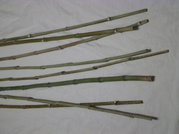 Bamboo sticks 61 to 66 all natural bamboo pieces for Where to buy bamboo sticks for crafts