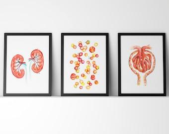 Set of 3 Nephrology Watercolor Prints - Kidneys, Blood Cells, Glomerulus Watercolor Prints in Red - Nephrologist Urologist Art