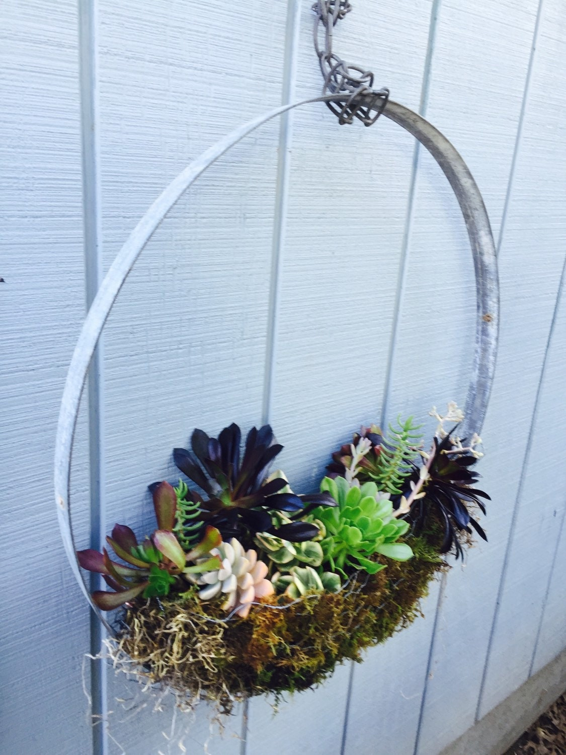 Repurposed Wine Barrel Ring Succulent Hanger And Display