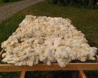 Romeldale CVM Raw Fleece