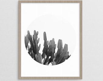 Cactus Photograph  |  wanderlust desert southwestern art print