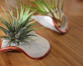 Air plant holders (set of 2)