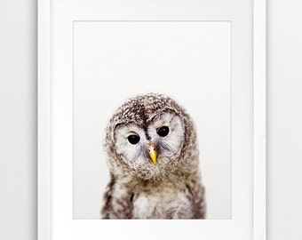 Owl Print, Nursery Wall Art, Baby Owl Photo, Woodlands Nursery Animal, Nursery Decor, Animal Print, Kids Room Printable Art Digital Download