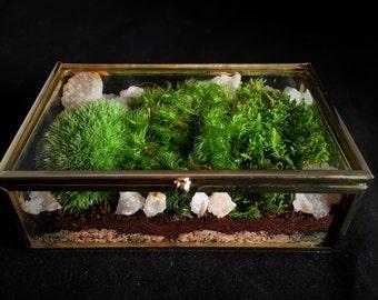 Jewelry Box Terrarium // Small Terrarium // Moss Terrarium // Terrarium Gift // Indoor Plant
