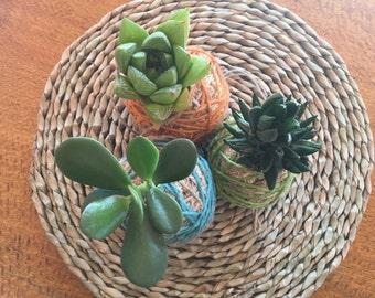 Kokedama Moss Balls with Live Succulent Plant