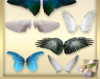6 FEATHERS ANGEL WINGS vol. 2 photo of overlays photography-overlays - birds wings - feathers clipart - instant download - graphics - png
