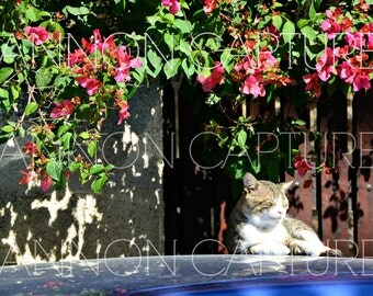 Island Cat