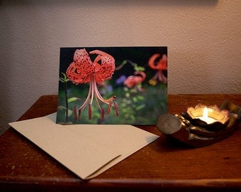 Greeting Card 5 x 7 Tiger Lily Horizontal Study