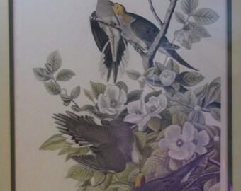 "Carolina Turtle Dove"" John James Audubon's Birds of America, Plate #17."