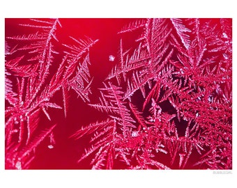 Nature Photography PRINT, Christmas Frost -2, Wall Art