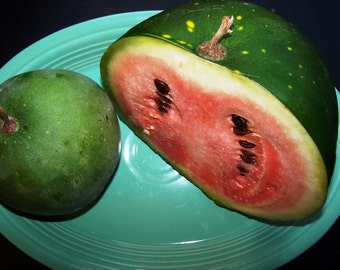 Melon Florida Giant (25, 50, 100 seeds ) huge watermelon organic heirloom #mid