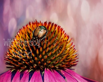 Cone Flower - Japanese Beetle - Champagne Bokeh - Purple Cone flowers - Photo Print - 5x7  8X10  11X14 16X20 inches - Home Decor - Botanical