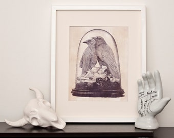 Crow Taxidermy - Art Print- Various sizes