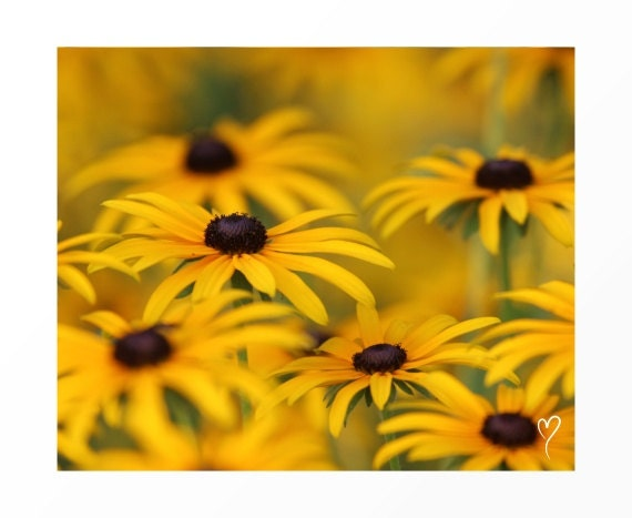 """Yellow Picture of a Yellow Daisies Up Close, Yellow Art Print, Yellow Home Decor, Yellow Flowers, Fine Art Photograph """"Yellow Daisies"""""""
